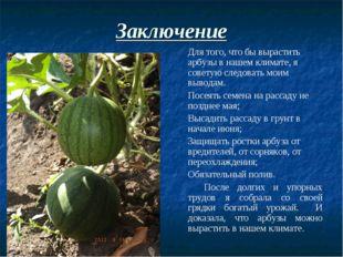 Заключение Для того, что бы вырастить арбузы в нашем климате, я советую след