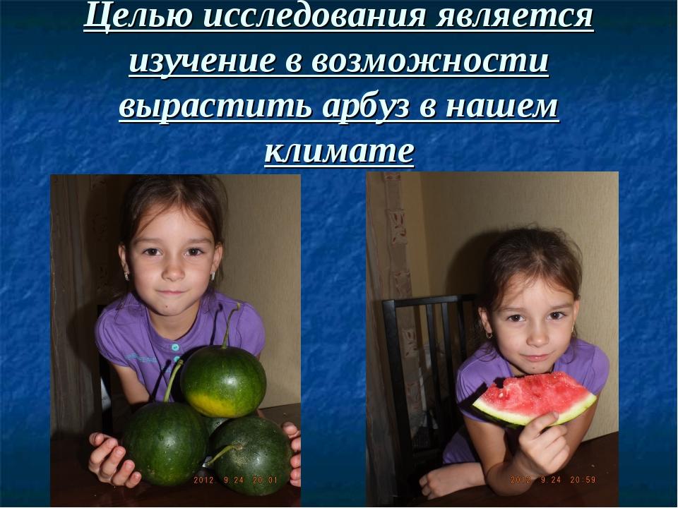 Целью исследования является изучение в возможности вырастить арбуз в нашем кл...