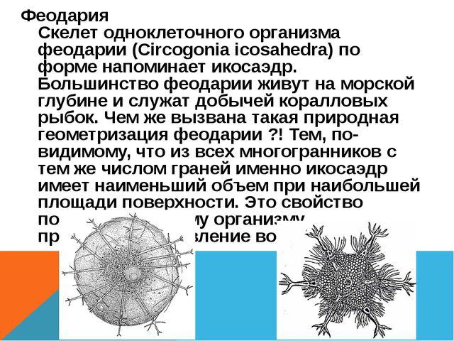 Феодария Скелет одноклеточного организма феодарии (Circogonia icosahedra) по...