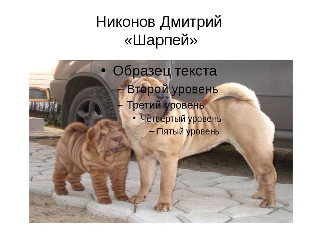 Никонов Дмитрий «Шарпей»