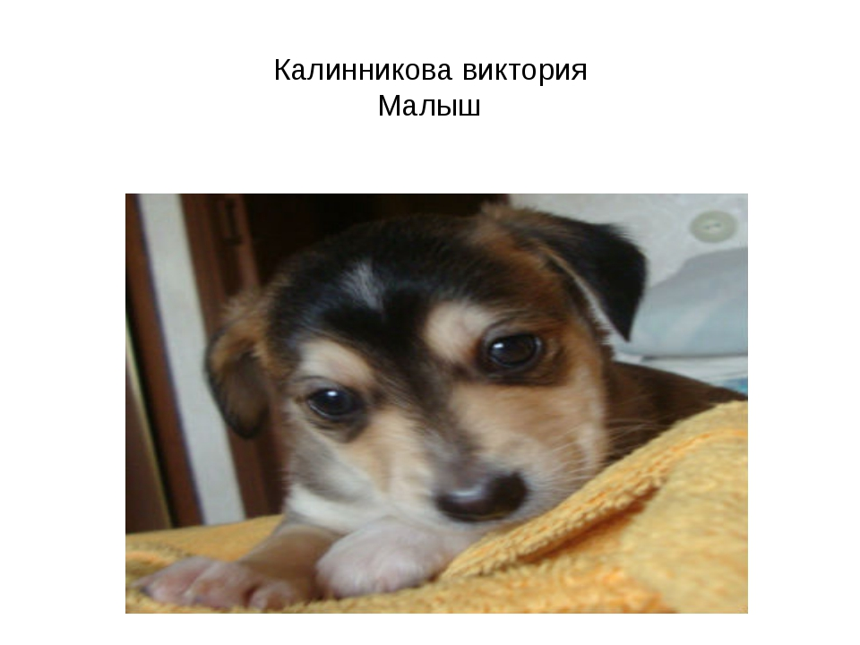 Калинникова виктория Малыш