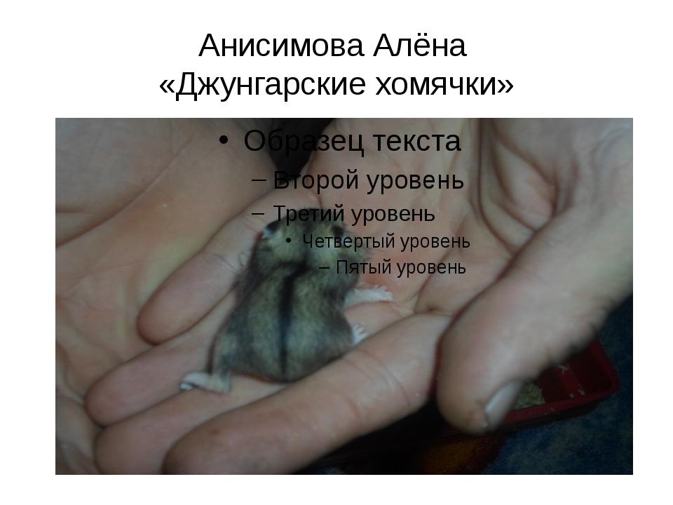 Анисимова Алёна «Джунгарские хомячки»