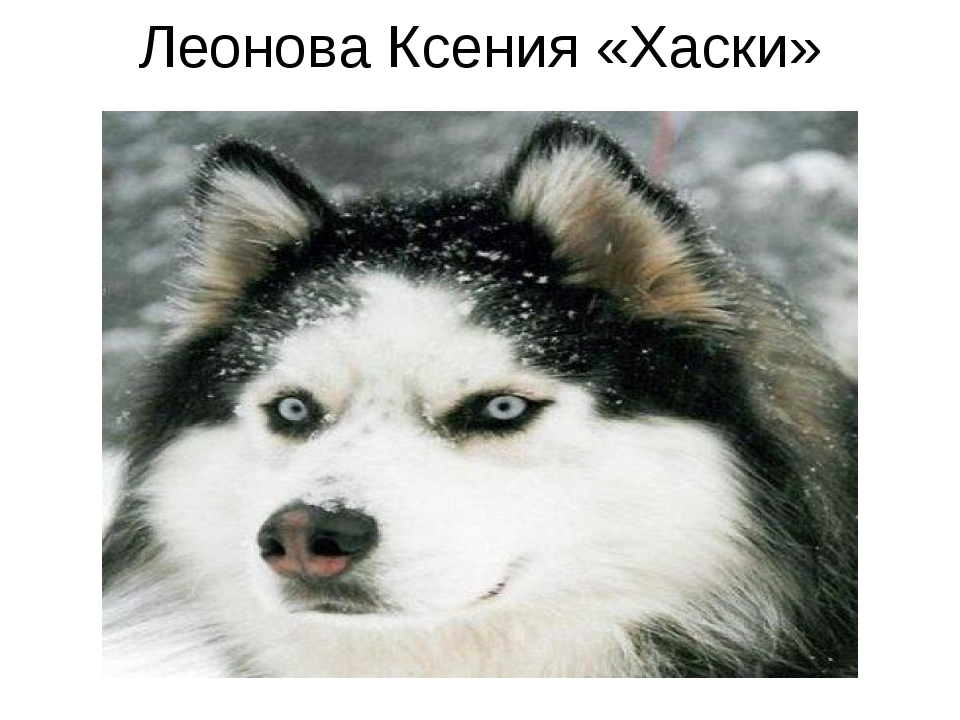 Леонова Ксения «Хаски»