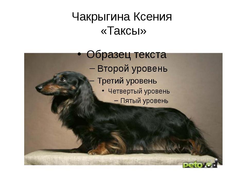 Чакрыгина Ксения «Таксы»