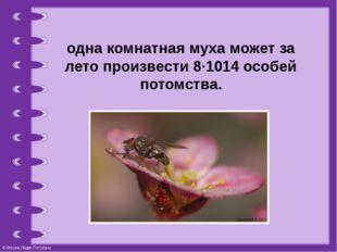одна комнатная муха может за лето произвести 8∙1014особей потомства. © Фокин
