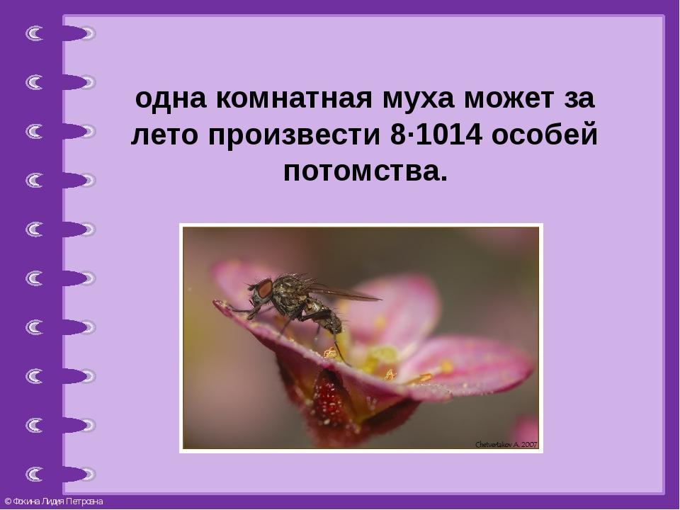 одна комнатная муха может за лето произвести 8∙1014особей потомства. © Фокин...
