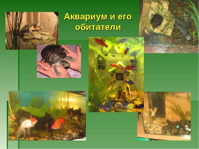 Аквариум и его обитатели