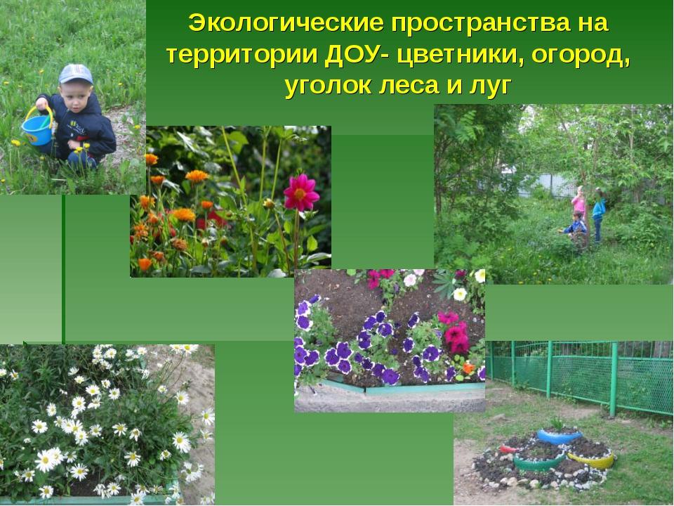 Экологические пространства на территории ДОУ- цветники, огород, уголок леса и...