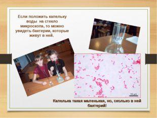 Если положить капельку воды на стекло микроскопа, то можно увидеть бактерии,