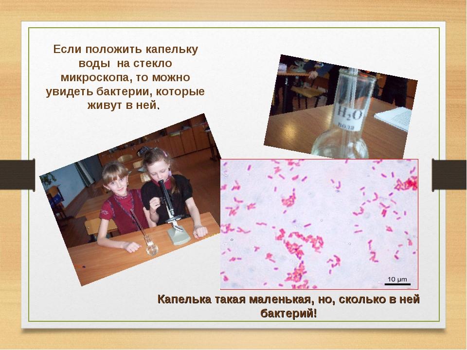 Если положить капельку воды на стекло микроскопа, то можно увидеть бактерии,...