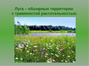 Луга – обширные территории с травянистой растительностью.