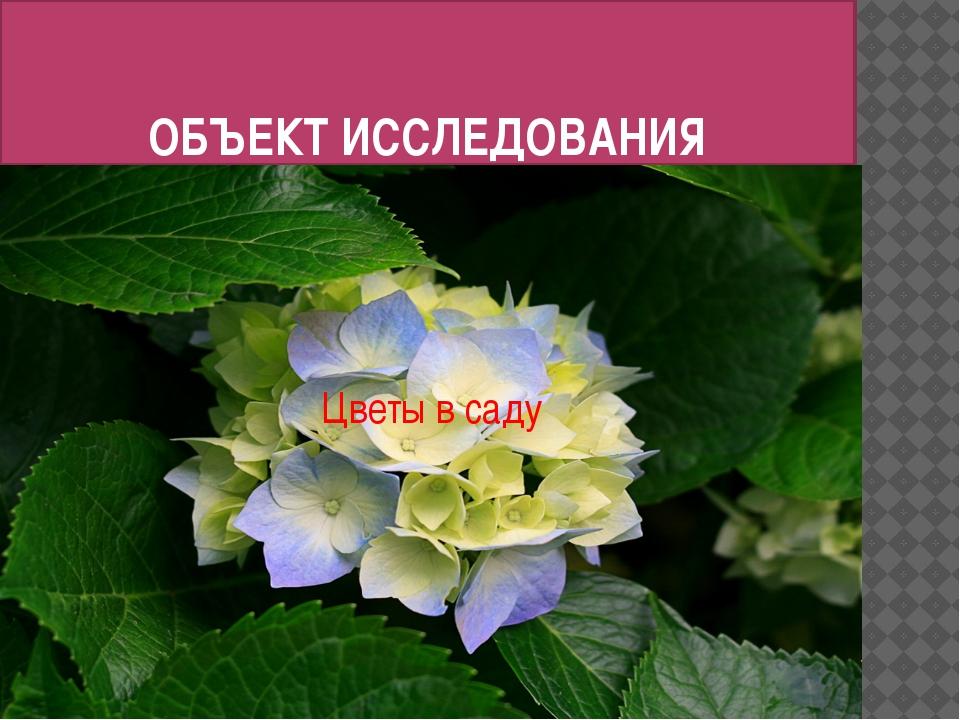 ОБЪЕКТ ИССЛЕДОВАНИЯ Цветы в саду