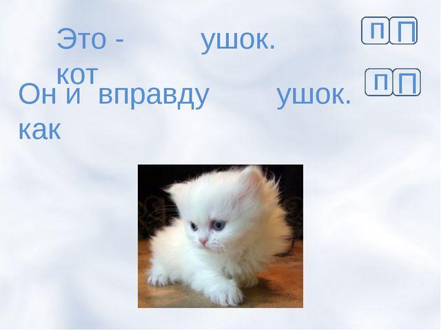 Это - кот ушок. Он и вправду как ушок. п П п П