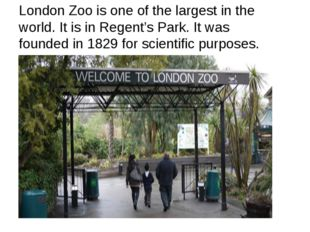 London Zoo is one of the largest in the world. It is in Regent's Park. It was