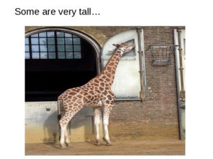 Some are very tall…