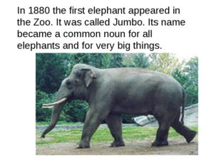 In 1880 the first elephant appeared in the Zoo. It was called Jumbo. Its name