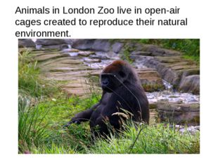 Animals in London Zoo live in open-air cages created to reproduce their natur