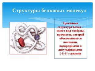Структуры белковых молекул Третичная структура белка – имеет вид глобулы, про