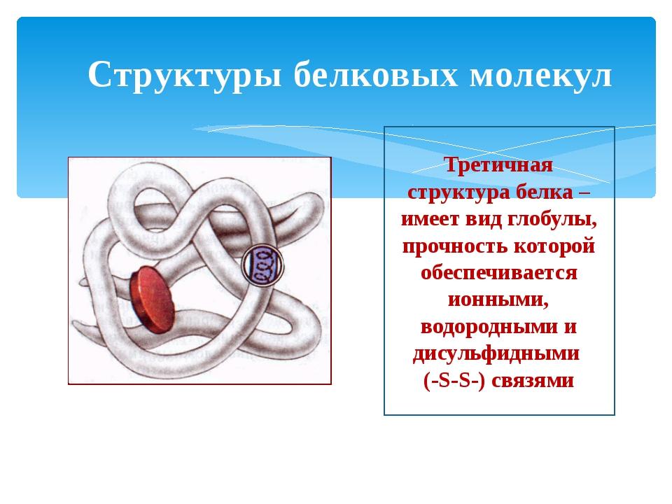 Структуры белковых молекул Третичная структура белка – имеет вид глобулы, про...