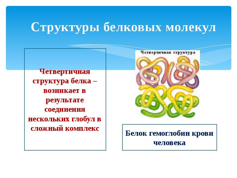 Структуры белковых молекул Четвертичная структура белка – возникает в результ...