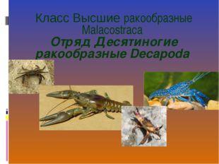 Класс Высшие ракообразные Malacostraca Отряд Десятиногие ракообразные Decapo
