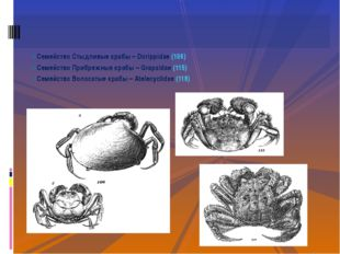 Семейство Стыдливые крабы – Dorippidae (106) Семейство Прибрежные крабы – Gra