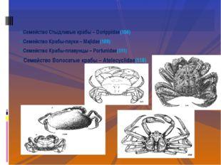 Семейство Стыдливые крабы – Dorippidae(106) Семейство Крабы-пауки – Majidae(1