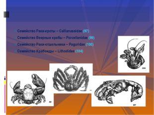 Семейство Раки-кроты – Callianassidae (97) Семейство Веерные крабы – Porcella