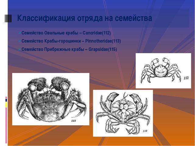 Семейство Овальные крабы – Cancridae(112) Семейство Крабы-горошинки – Pinnoth...