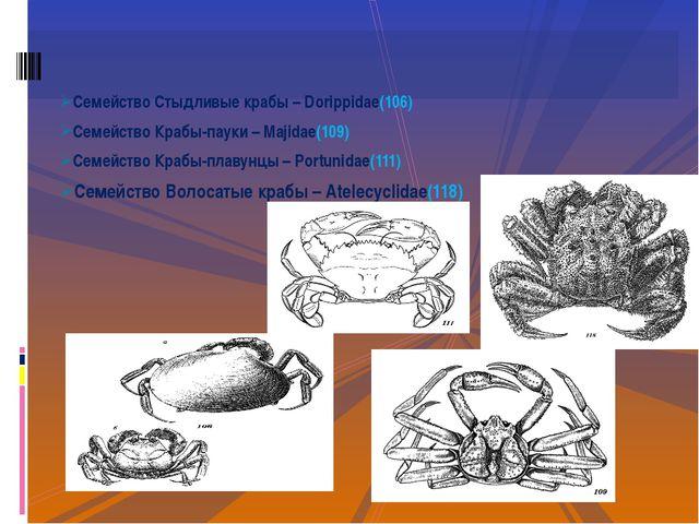 Семейство Стыдливые крабы – Dorippidae(106) Семейство Крабы-пауки – Majidae(1...