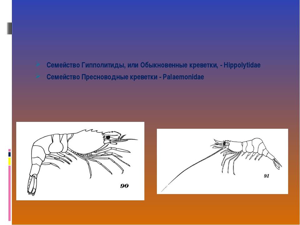 Семейство Гипполитиды, или Обыкновенные креветки, - Hippolytidae Семейство Пр...