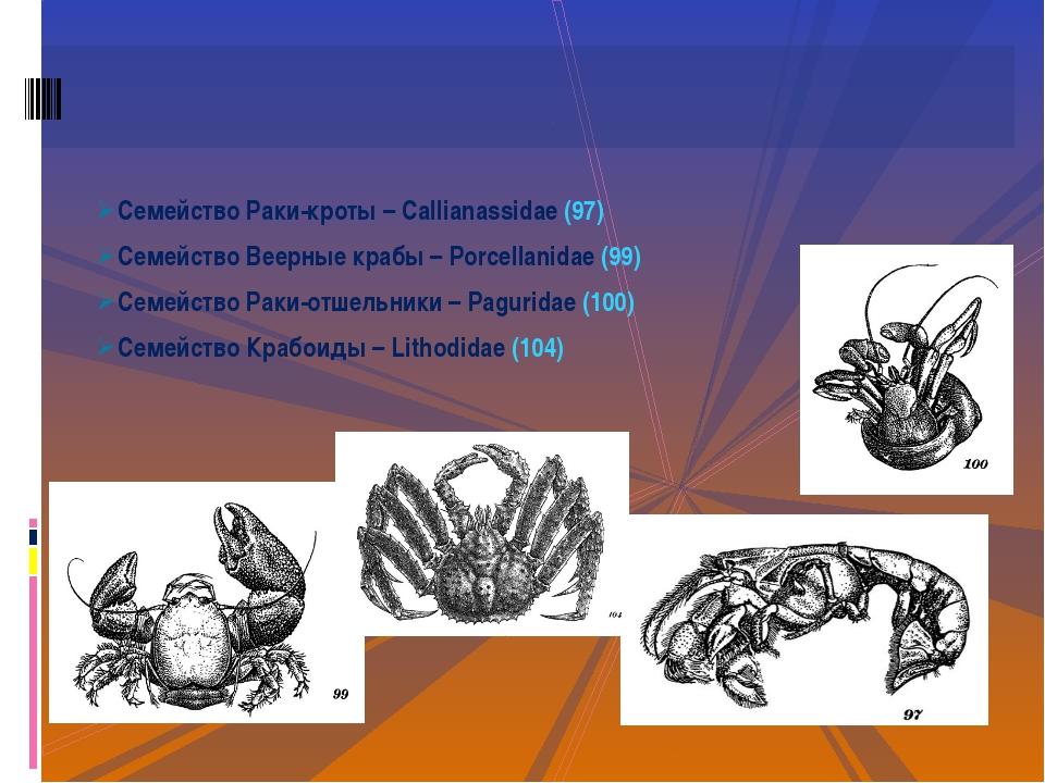 Семейство Раки-кроты – Callianassidae (97) Семейство Веерные крабы – Porcella...
