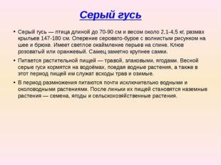 Серый гусь Серый гусь— птица длиной до 70-90см и весом около 2,1-4,5кг, ра