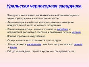 Уральская черногорлая завирушка Завирушки, как правило, не являются перелётн