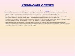 Уральская оляпка Околоводная птица очень характерной внешности, размером с не