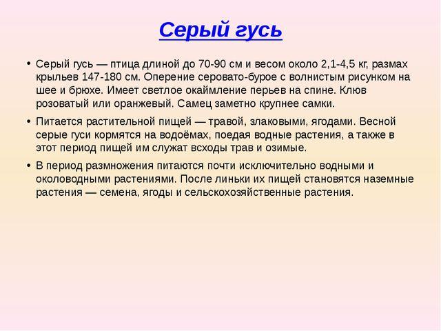 Серый гусь Серый гусь— птица длиной до 70-90см и весом около 2,1-4,5кг, ра...