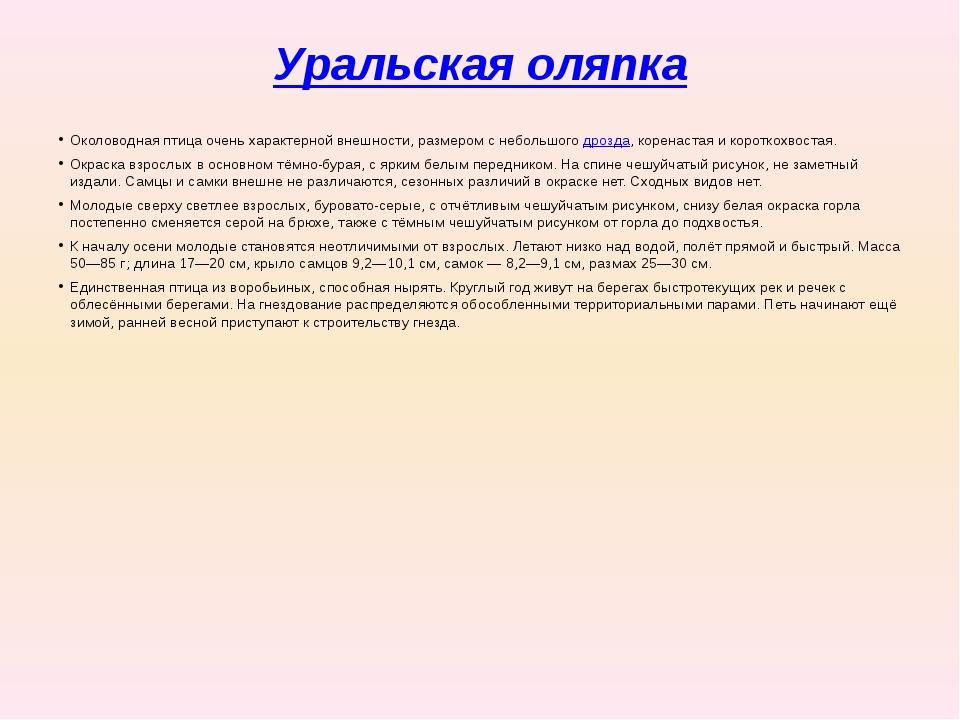 Уральская оляпка Околоводная птица очень характерной внешности, размером с не...