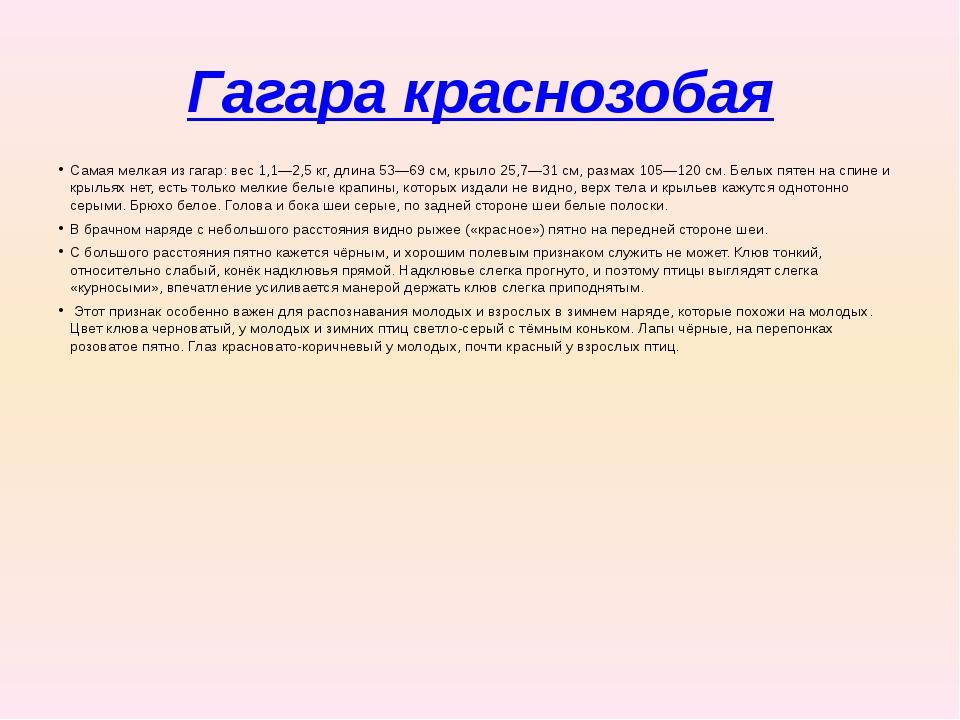 Гагара краснозобая Самая мелкая из гагар: вес 1,1—2,5кг, длина 53—69см, кры...
