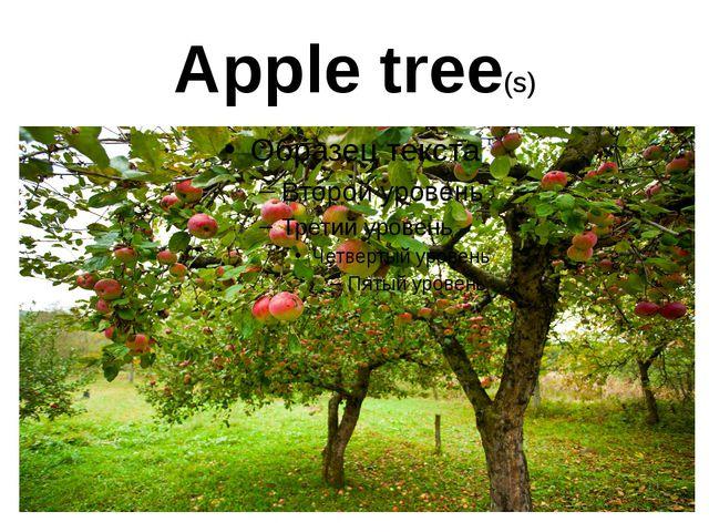 Apple tree(s)