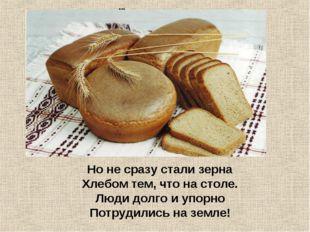 ... Но не сразу стали зерна  Хлебом тем, что на столе. Люди долго и упорн