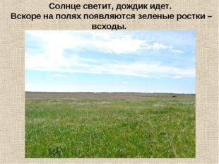 Солнце светит, дождик идет. Вскоре на полях появляются зеленые ростки – всходы.