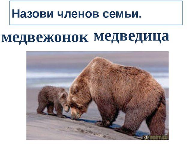 Назови членов семьи. медвежонок медведица