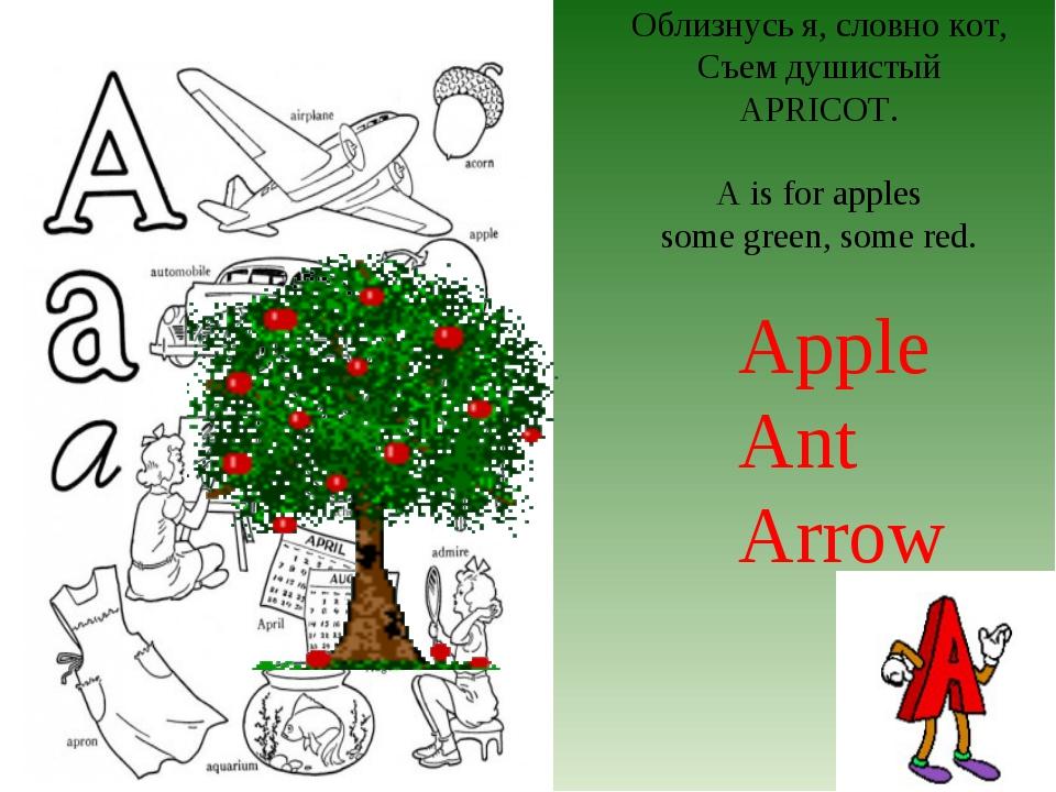Облизнусь я, словно кот, Съем душистый APRICOT. A is for apples some green, s...