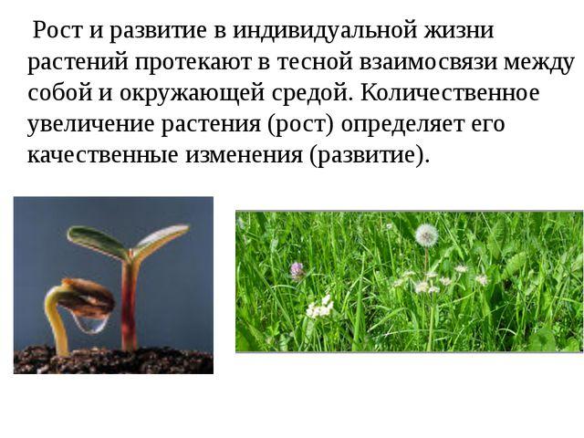 Рост и развитие в индивидуальной жизни растений протекают в тесной взаимосвя...