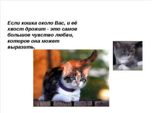 Если кошка около Вас, и её хвост дрожит - это самое большое чувство любви, к