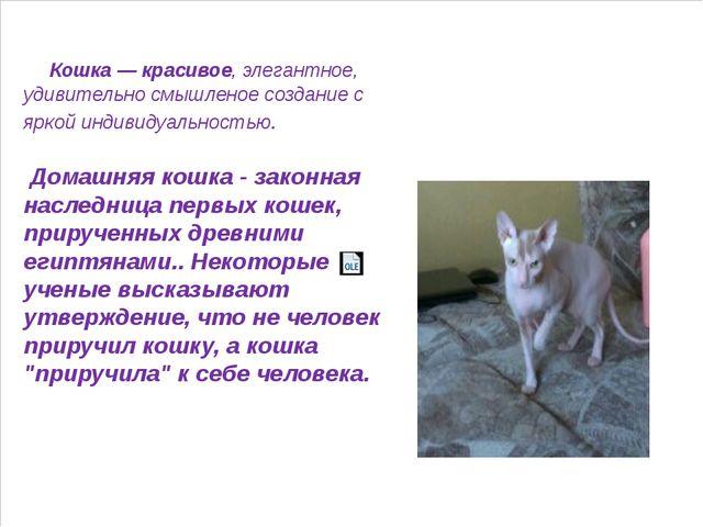 Кошка — красивое, элегантное, удивительно смышленое создание с яркой индивид...