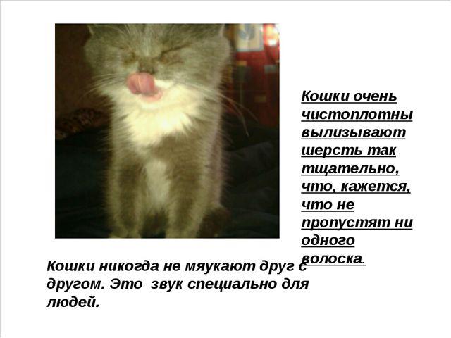 Кошки никогда не мяукают друг с другом. Это звук специально для людей. Кошки...