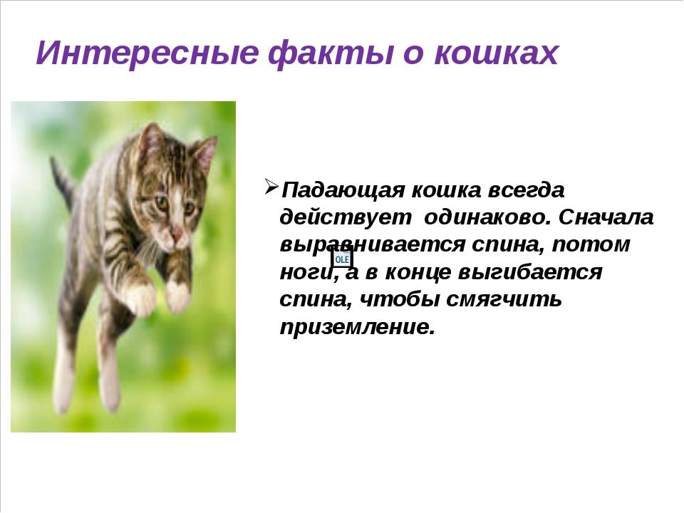 Интересные факты о кошках Падающая кошка всегда действует одинаково. Сначала...