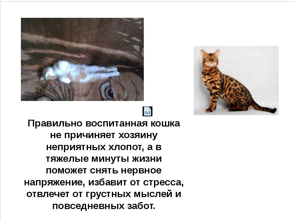 Правильно воспитанная кошка не причиняет хозяину неприятных хлопот, а в тяжел...