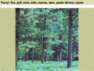 Растут: бук, дуб, липа, клён, каштан, орех, дикие яблони, груши. www.m mc.ru